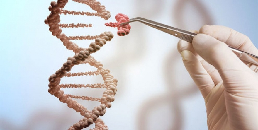 Ji berazê genetîka wî hatiye guhertin, organên ji bo mirovan
