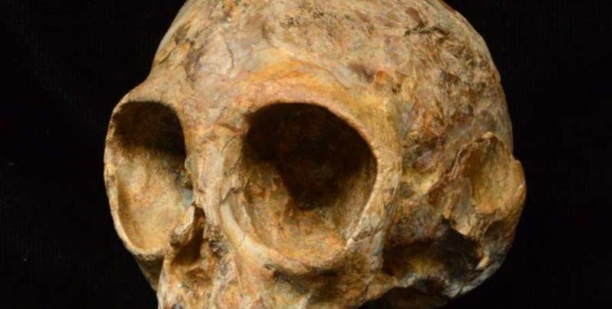 Qoqê serî yê 'xizmê me yê nêz' ê 13 milyon salî hate dîtin