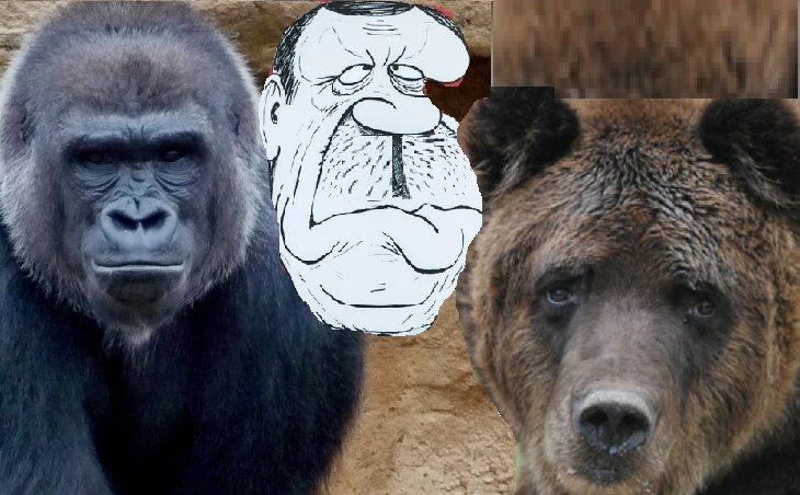 Gorîla, hirç û diktatorê dilxirç,gorîla,hirç,û,diktatorê,dilxirç